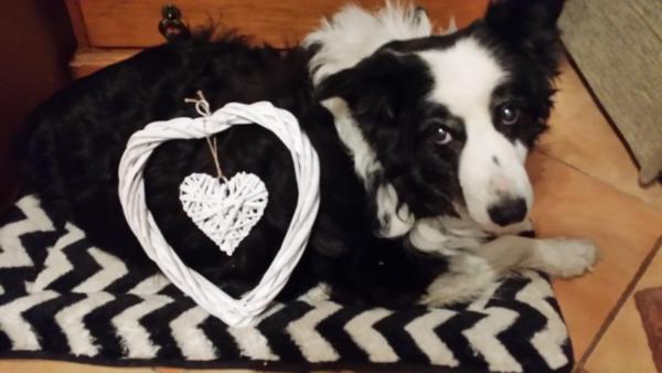 Fern - valentine's sweetie